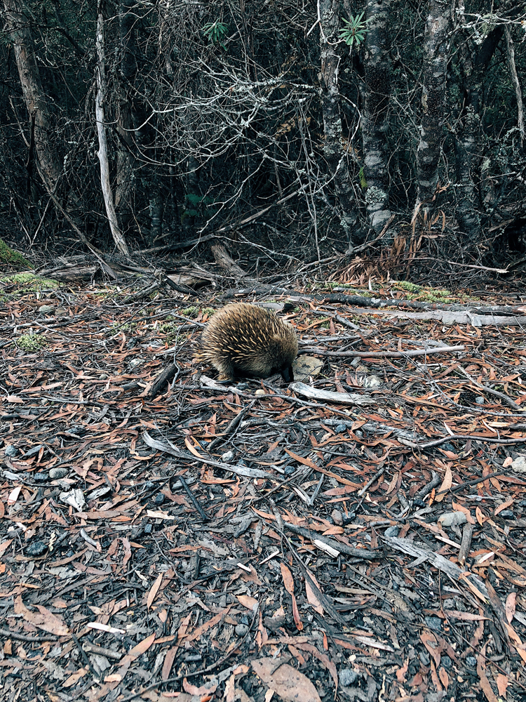tasmania-instagram-julia-trotti_12.jpg