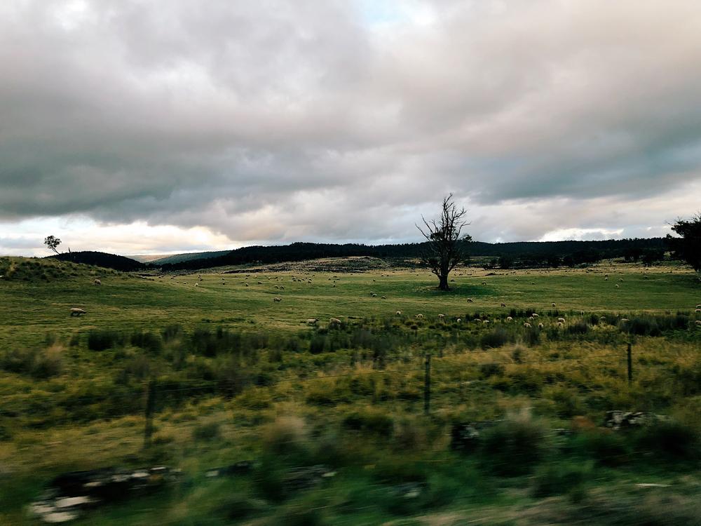 tasmania-instagram-julia-trotti_17.jpg