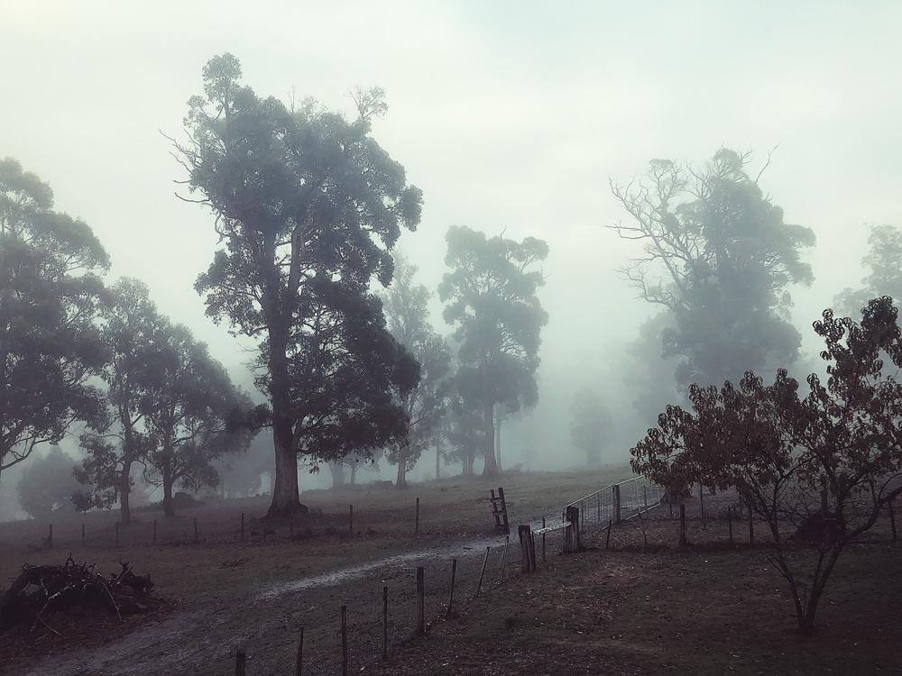 tasmania-instagram-julia-trotti_20.jpg