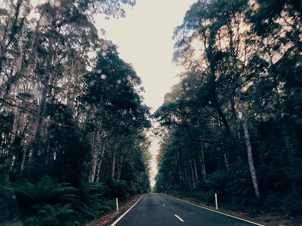 tasmania-instagram-julia-trotti_37.jpg