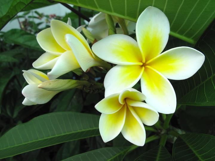 flowers Casa.jpg