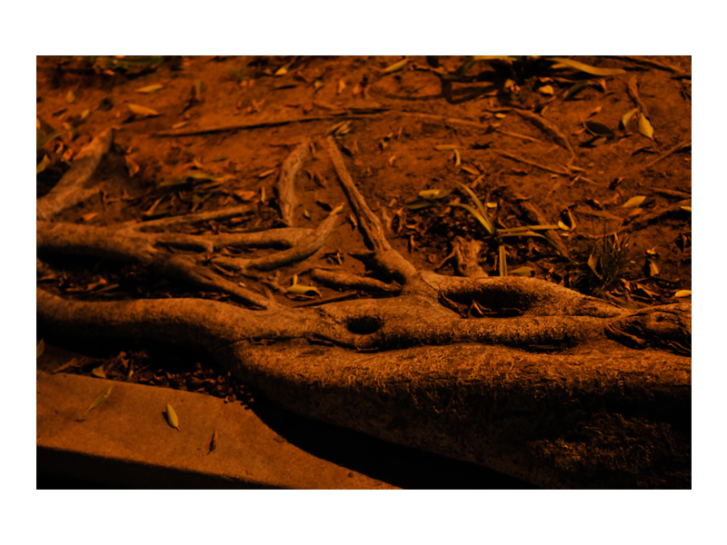 NATURE_HORI.JPEG_0008_Night Roots.jpg