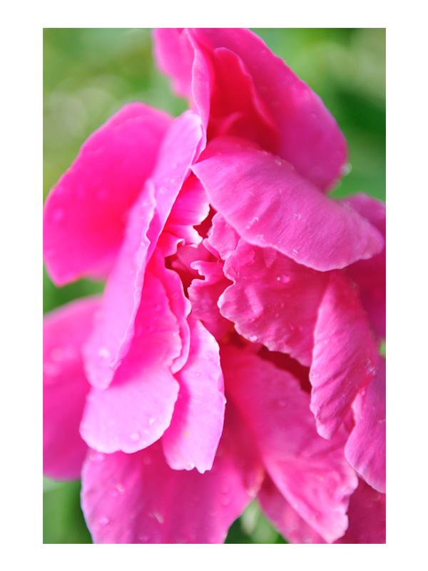 NATURE_VERT.JPEG_0004_Life Flower.jpg