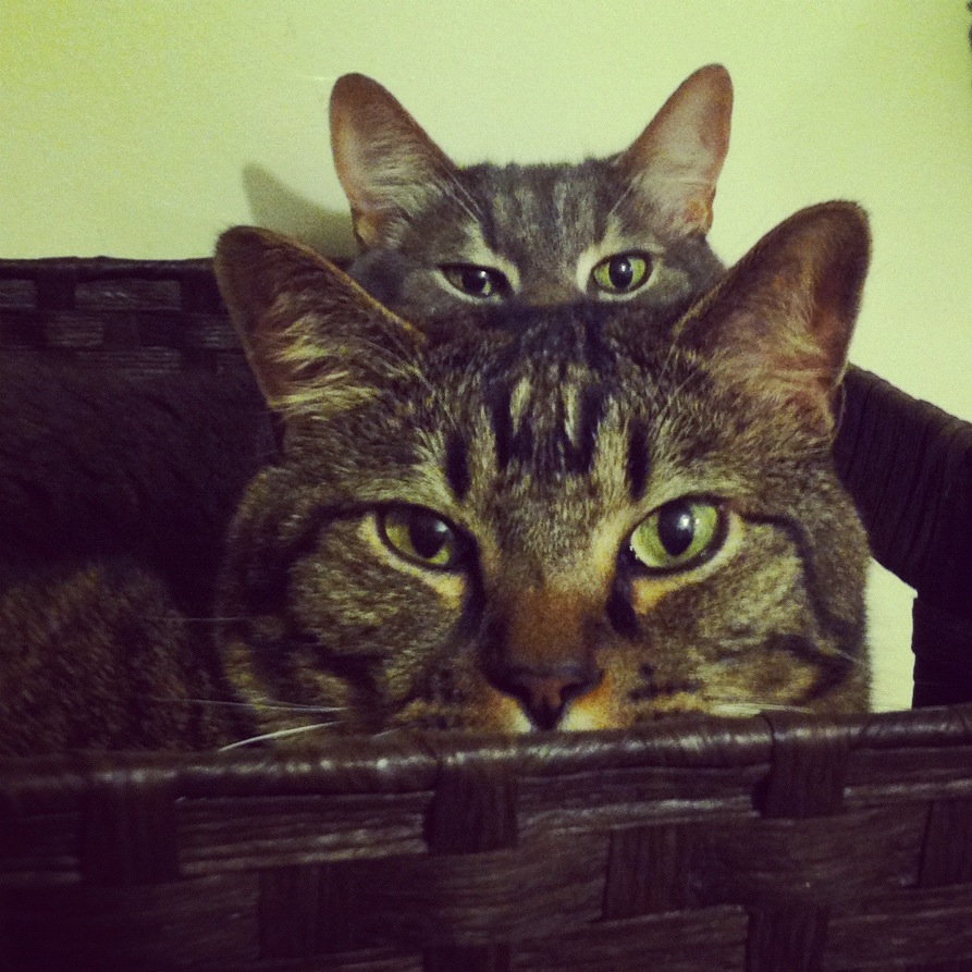 Kittypies