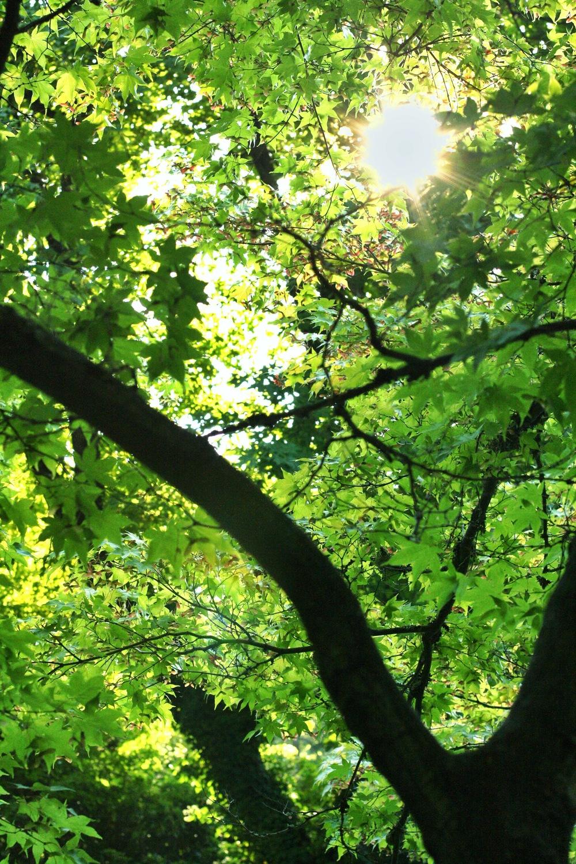 Lithia-Park-Ashland_heatherbyhand.jpg