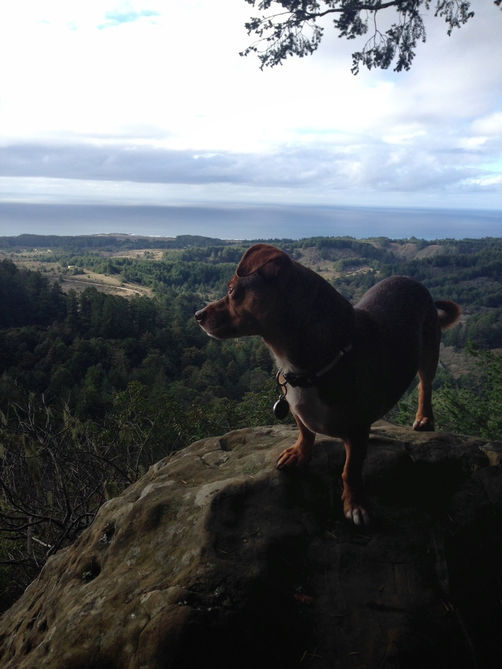 Rudybega enjoying the view from the top - Ano Nuevo State Park