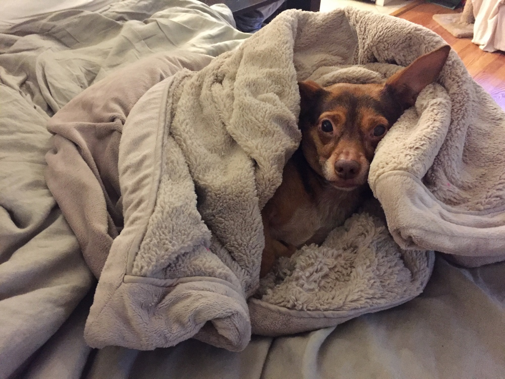 Rudy-blanket_heatherbyhand.jpg