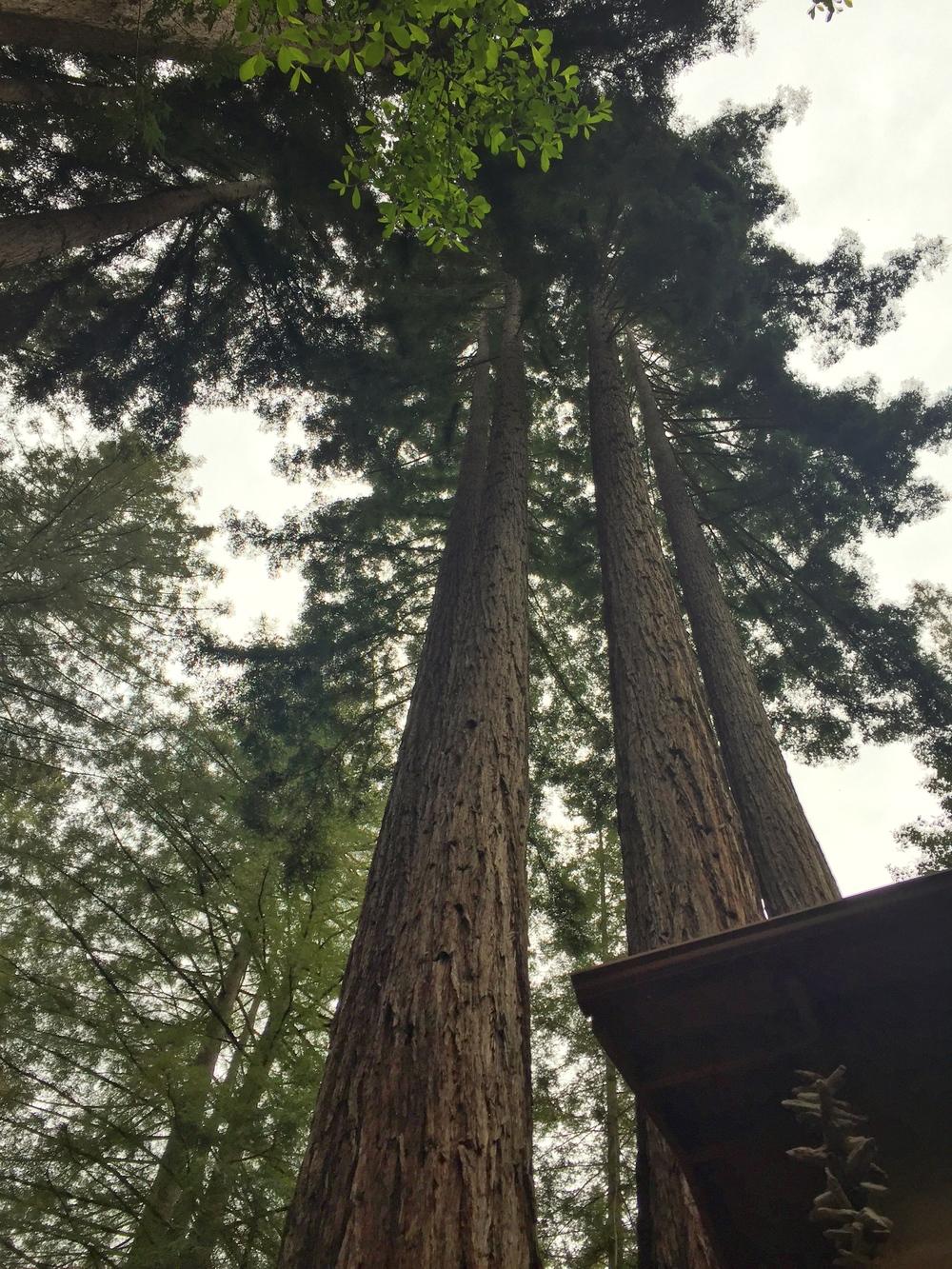 Redwood-neighbors_heatherbyhand.jpg