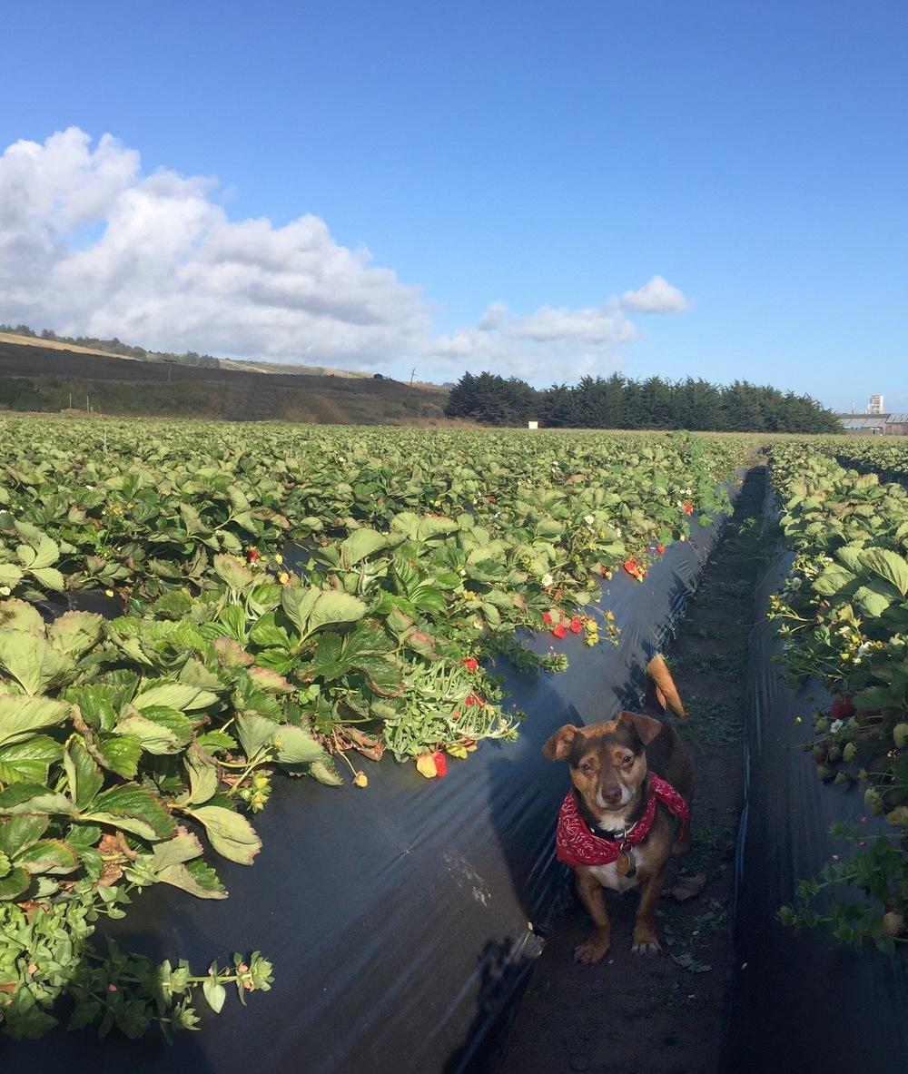 Rudybega-Strawberry-Field_heatherbyhand.jpg