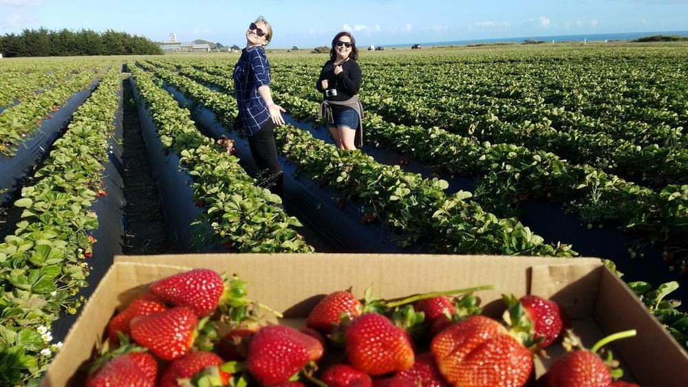Strawberry-Fields_heatherbyhand.com.JPG