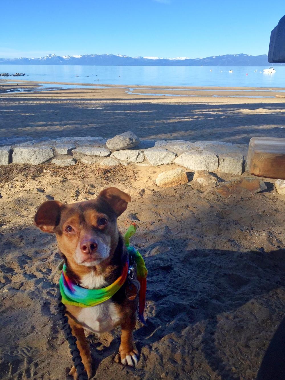 Rudy-Lake-Tahoe_heatherbyhand.jpg