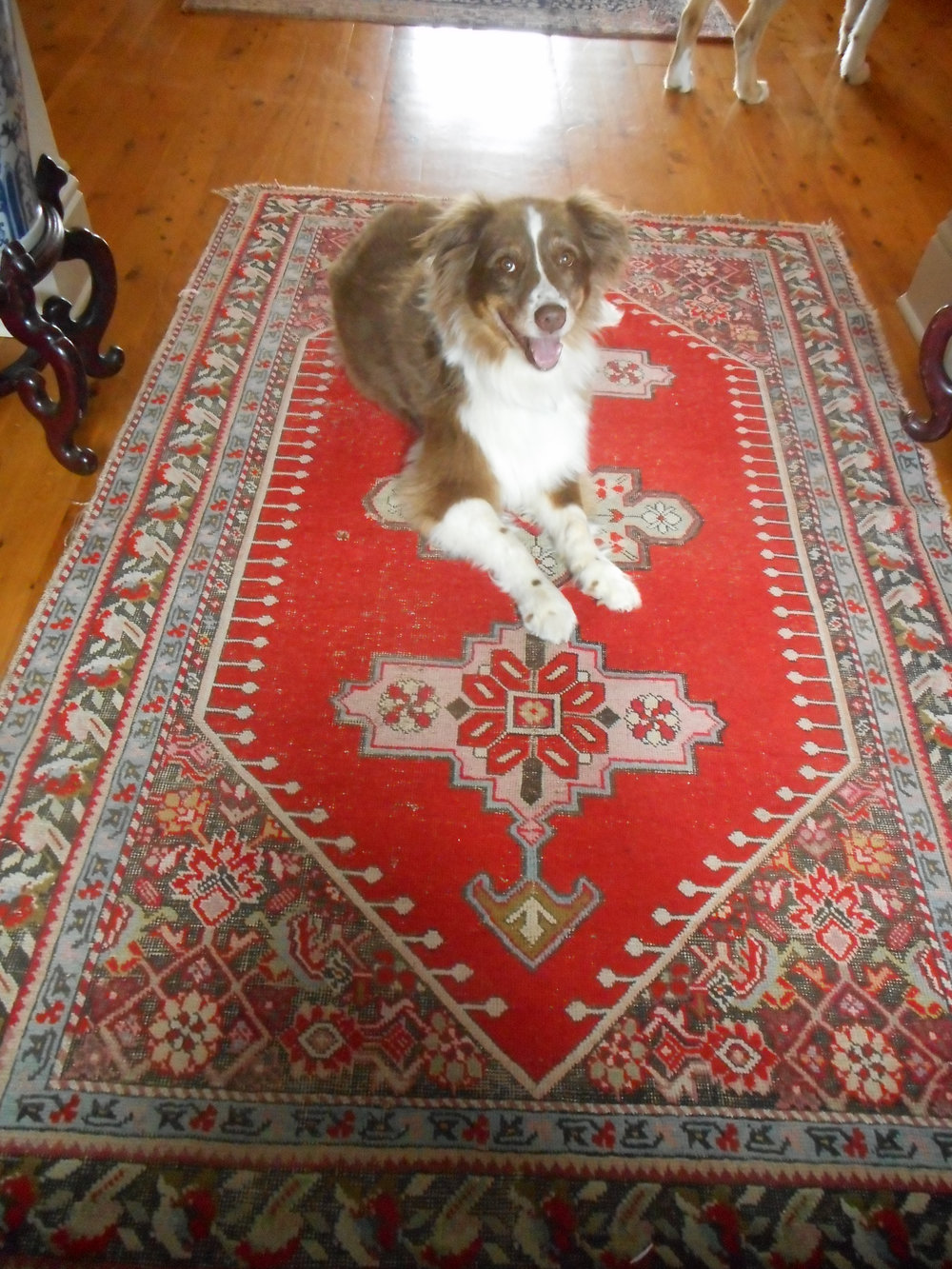 Jessie is clearly partial to antique rugs