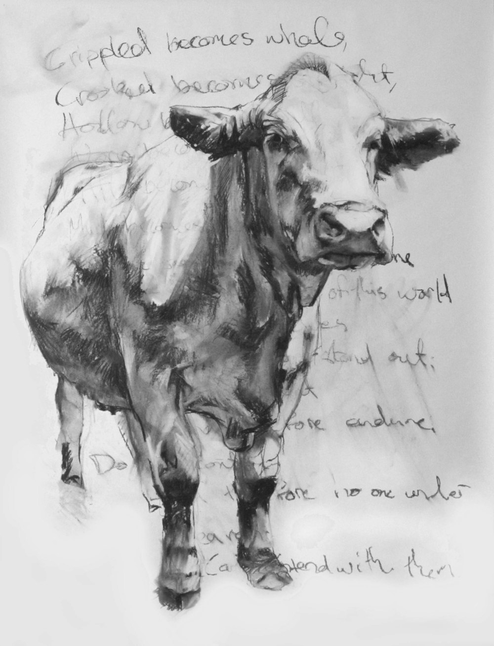Bert, Charcoal on Paper, 60x42 inches, 2010
