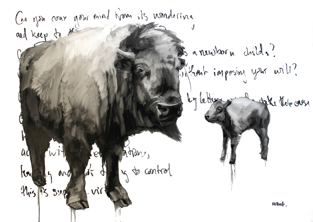 Bison Drawings 2014