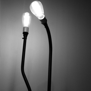 CYN LAMP