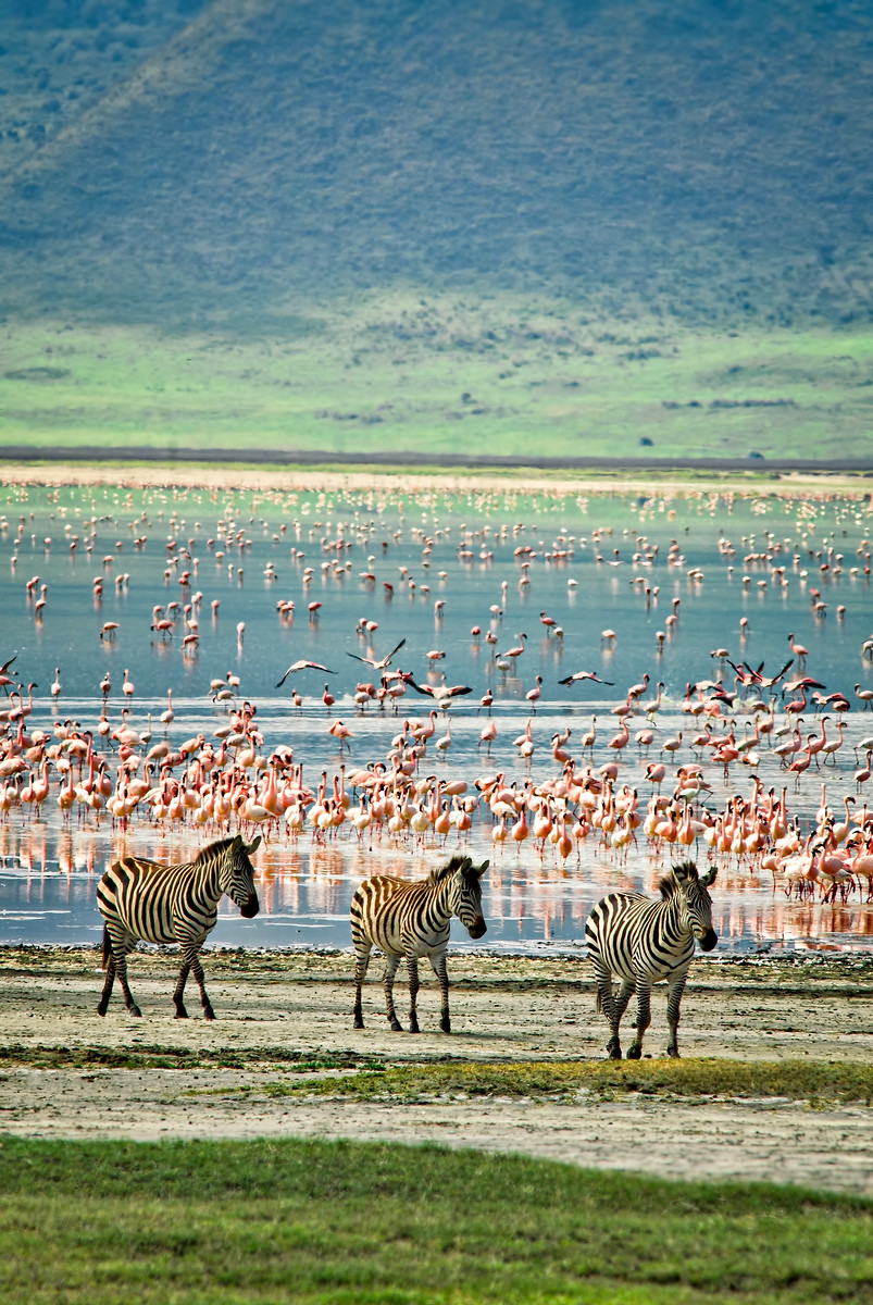 """Zebras and Flamingos and Flamingos"""