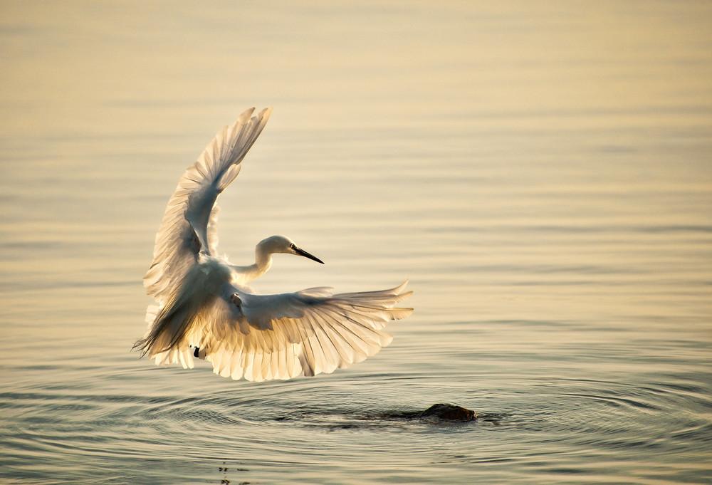 """""""Wings Alight"""""""