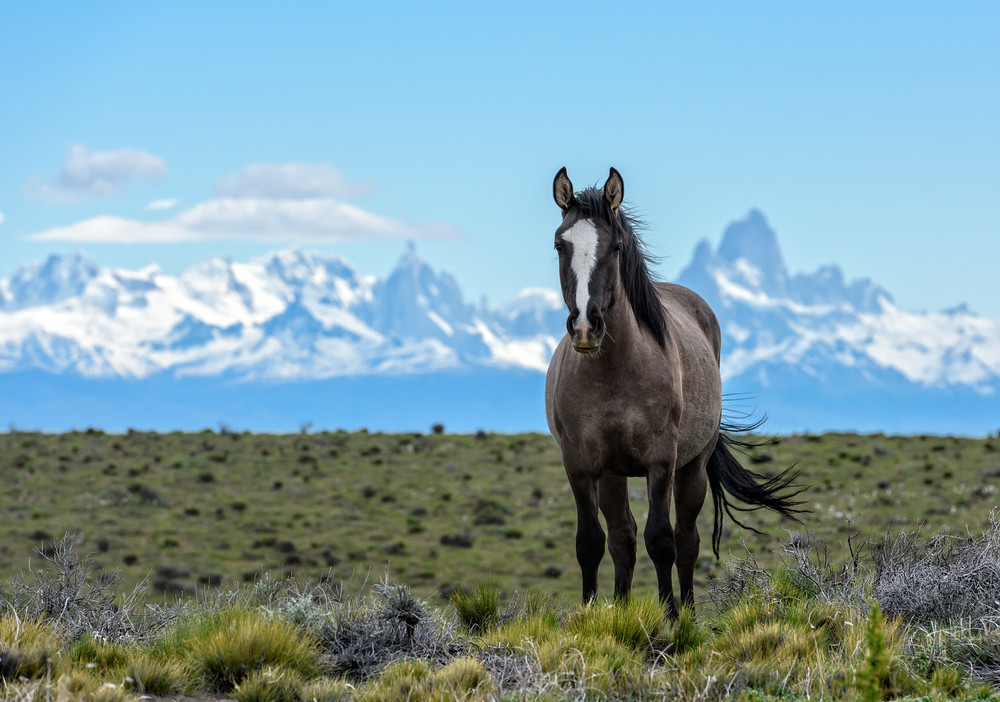 A horse in the wilds of Patagonia with Mount Fitz Roy in the background.