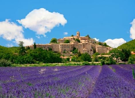 Provence_Lavendar.jpg