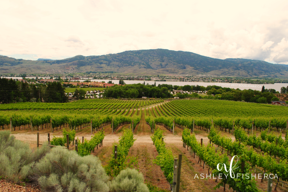 nk'mp winery osoyoos bc by ashley fisher on ashleyfisher.ca