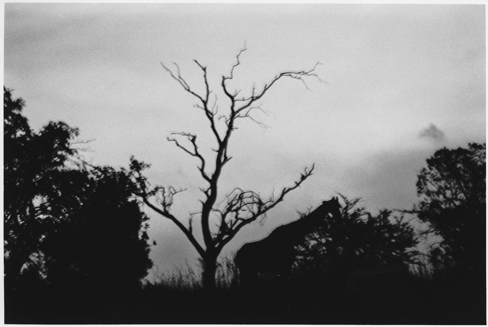Africa Tree.jpg