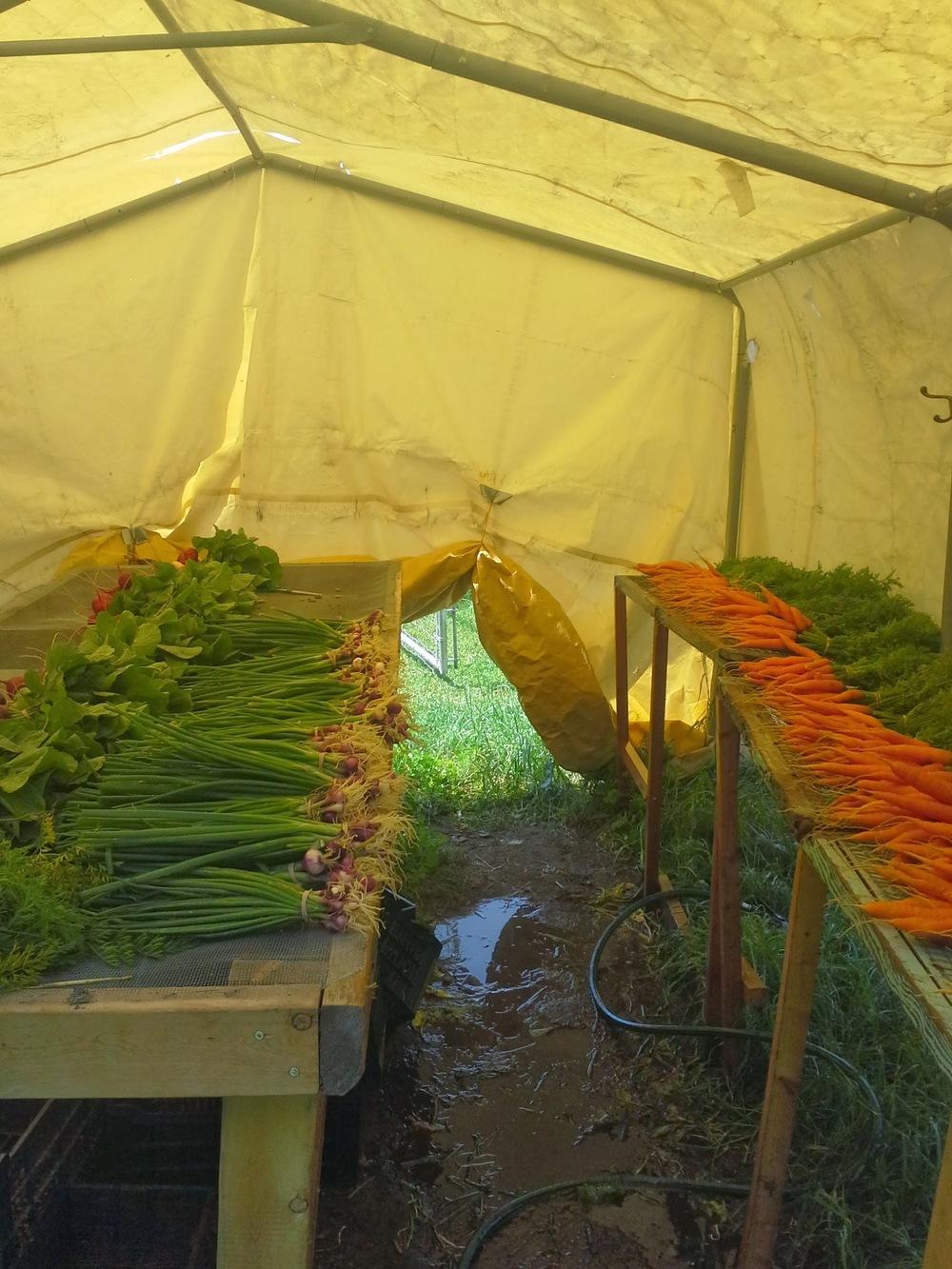Wash tent