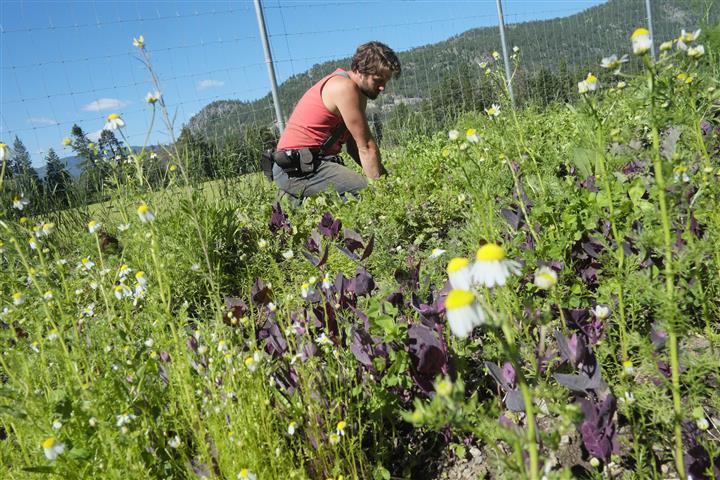 weeding (Small).JPG
