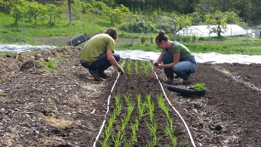 More helpers...Colin and Lisa transplanting.