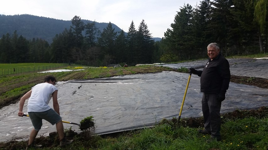 The staff didn't arrive until May, so April was kind of crazy. Jordan called in favours with friends and family to get the job done. Here, Papa and Baby Brother Marr help get some tarps down.