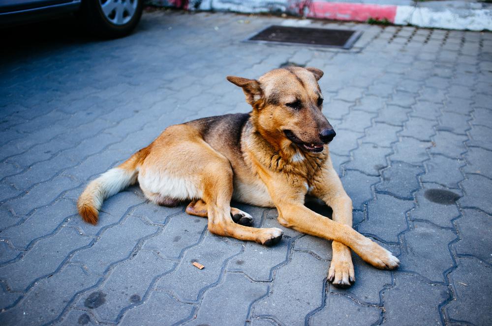 Chiang Mai Doge.jpg