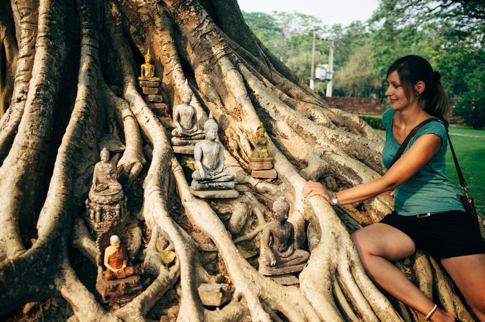 Suhkothai Tree Buddhas.jpg