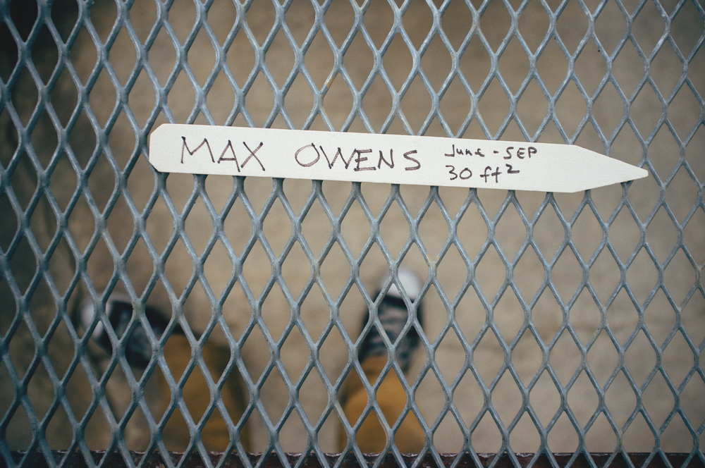 Max Owens, Apparently.jpg