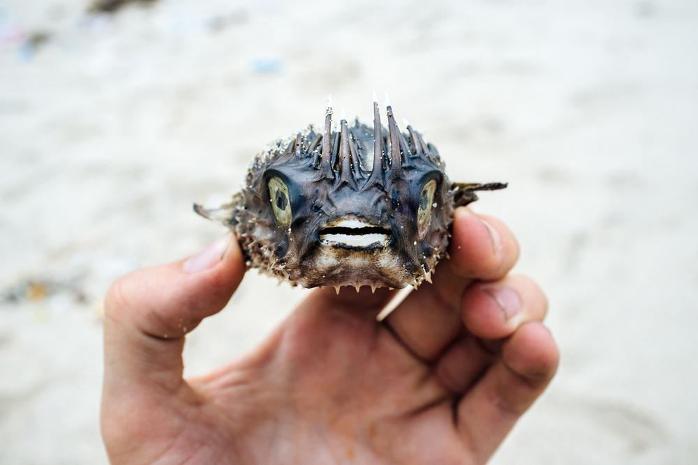 Yannick Blowfish 3.jpg