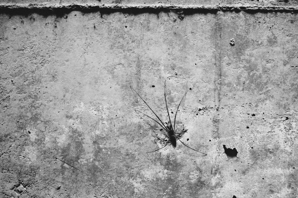 Main Drain Spider.jpg