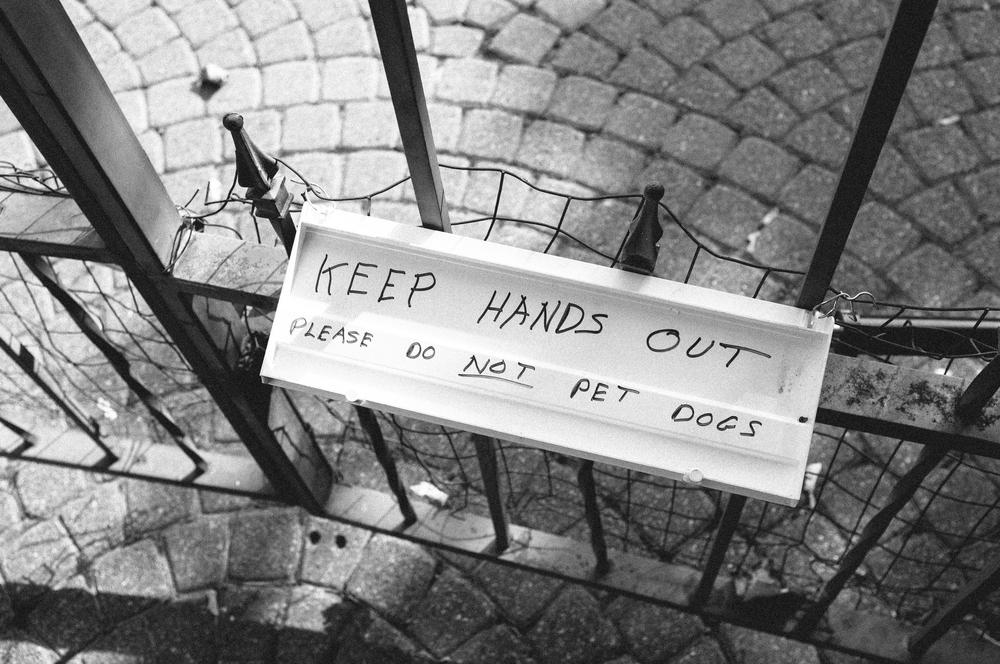 Scary Dog Gate.jpg
