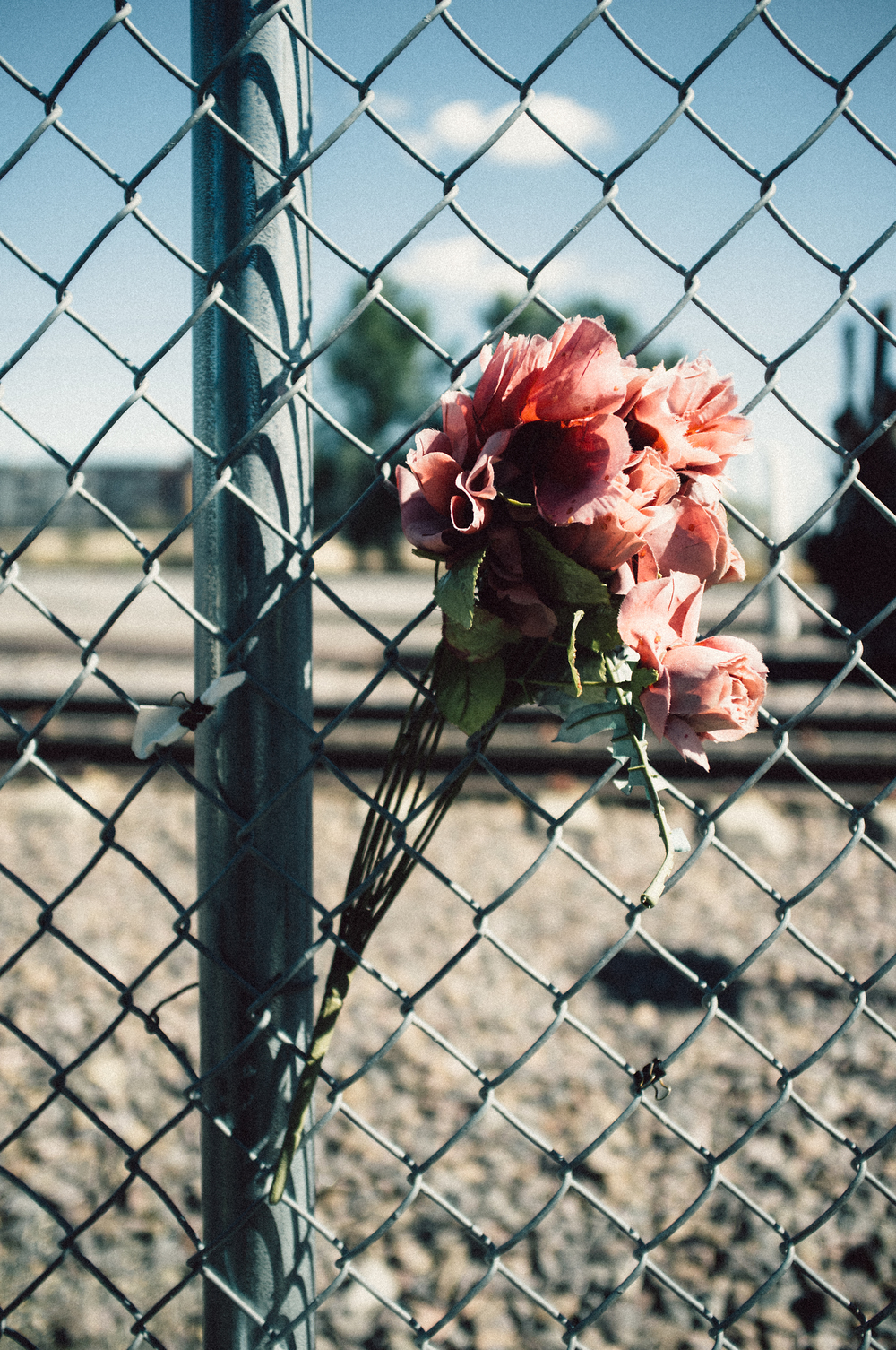 Train Yard Flowers.jpg