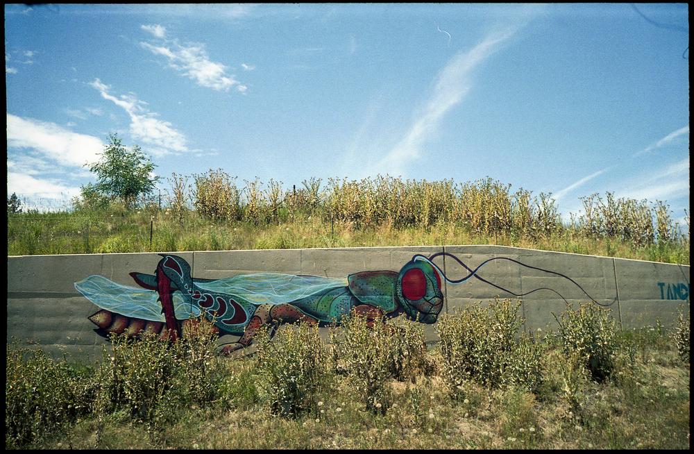 Bug Graffiti 35mm (small).jpg