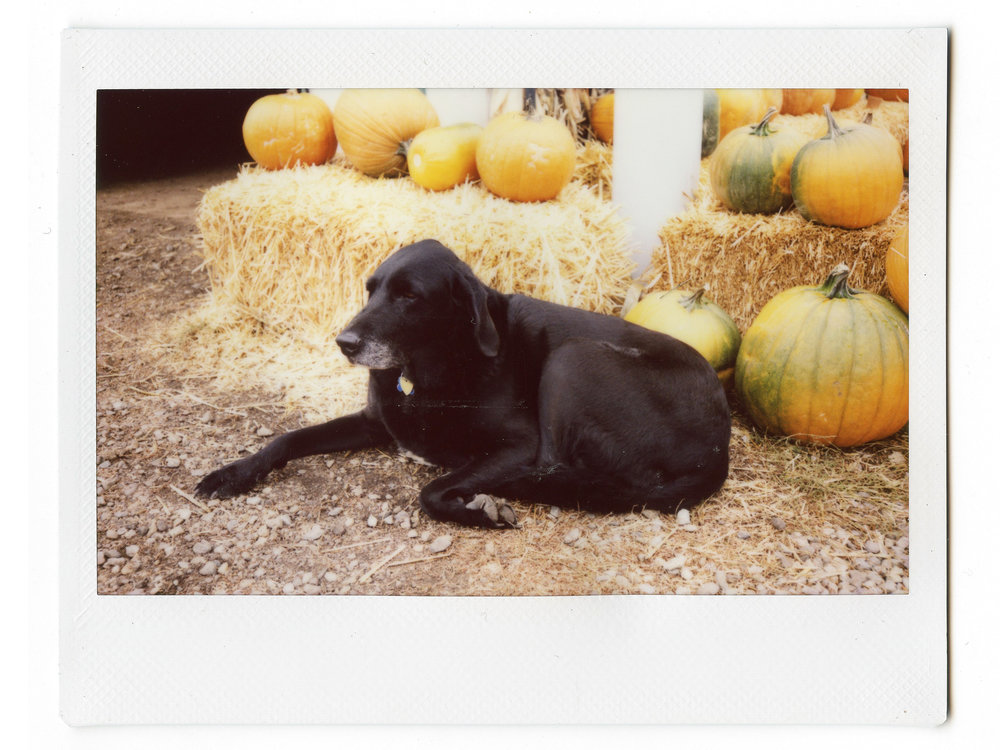 Instax Farm Doge.jpg
