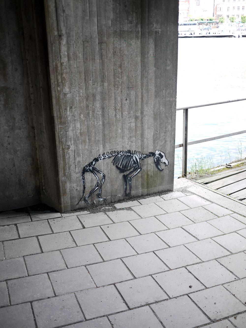 Ungulate Skeleton.jpg