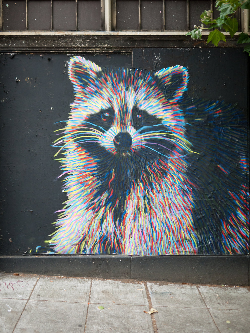 Raccoon Art.jpg