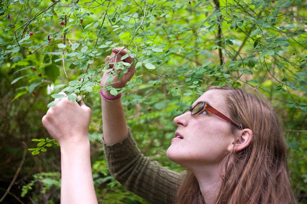 Emily Picking Berries.jpg
