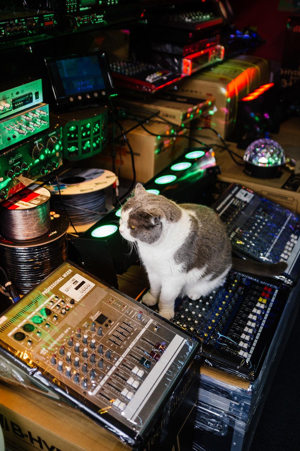 CAT NP.jpg