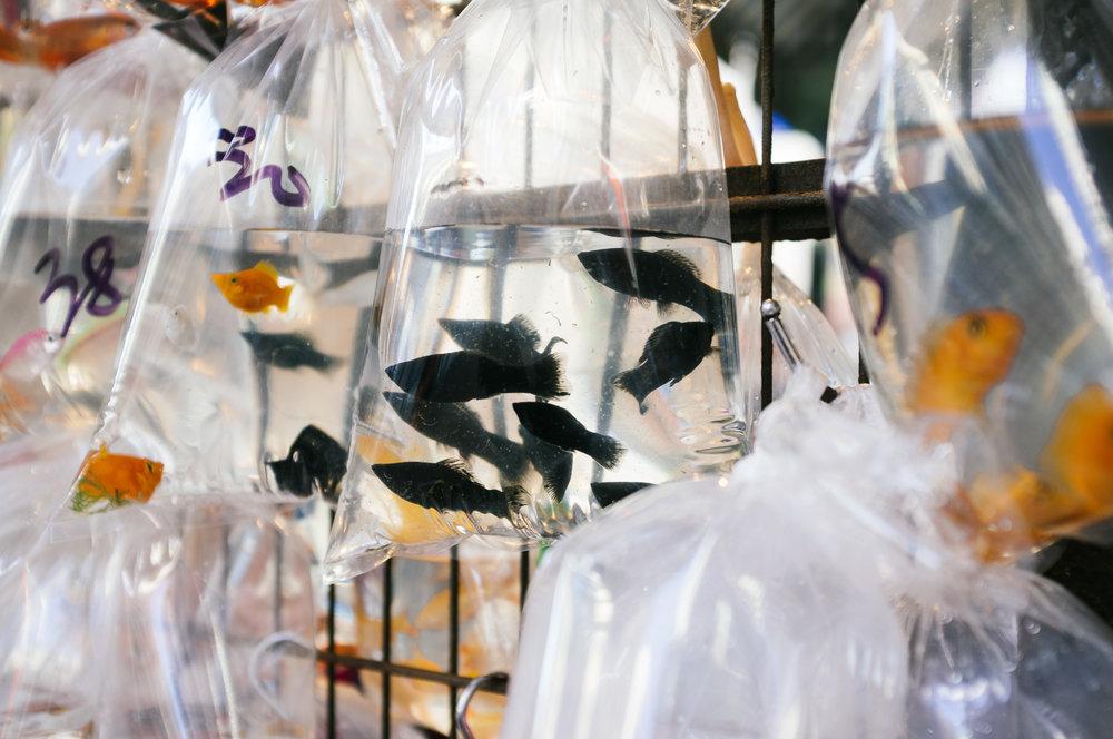 Mong Kok Fish.jpg