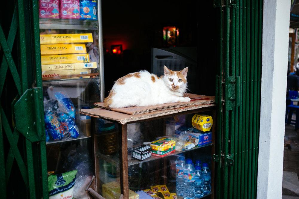 Hanoi Cat.jpg