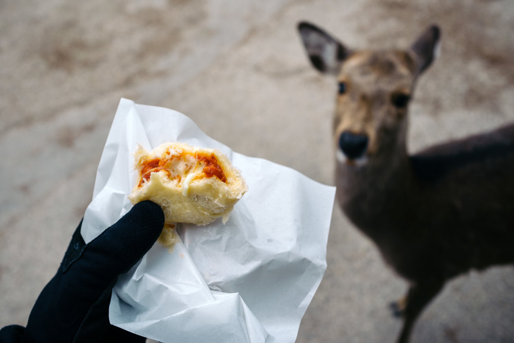 Nara Dough Deer.jpg