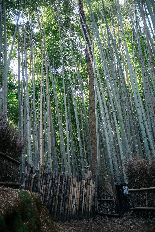 Kyoto Arashiyama 10.jpg