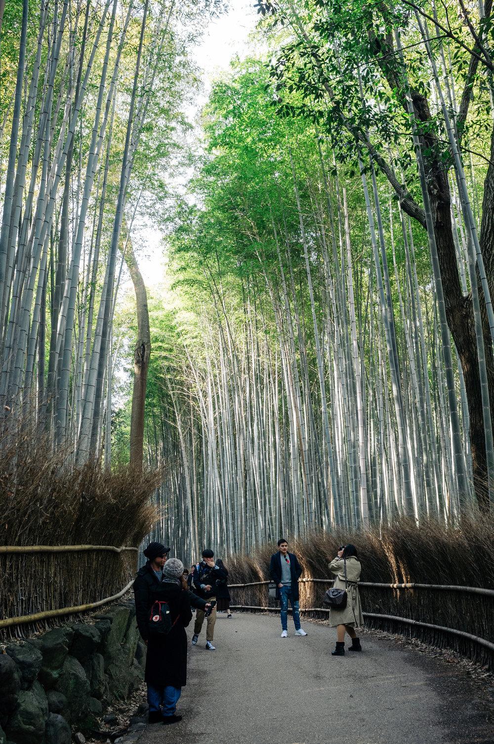 Kyoto Arashiyama 3.jpg