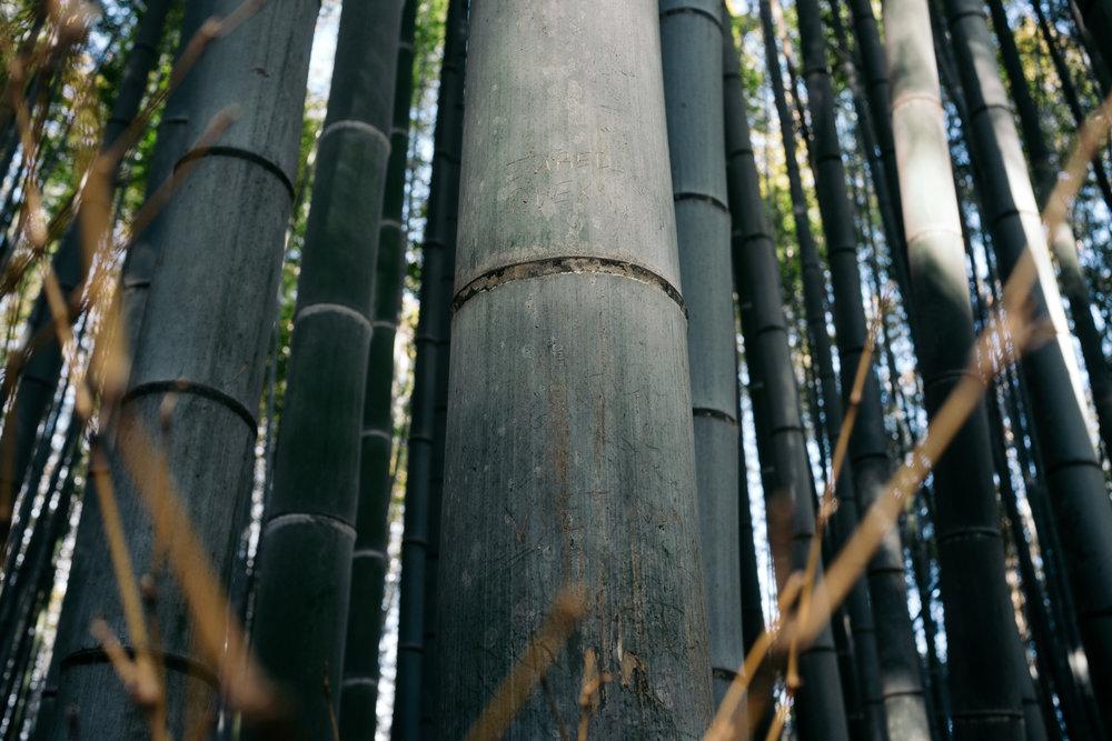 Kyoto Arashiyama 9.jpg