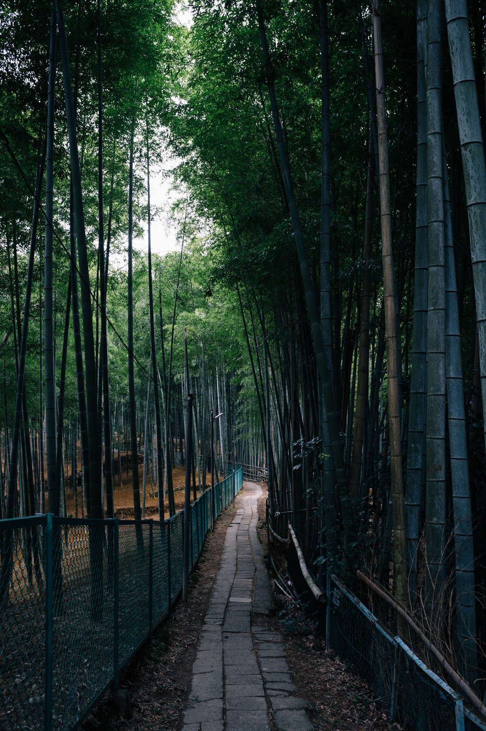 Inari 5.jpg