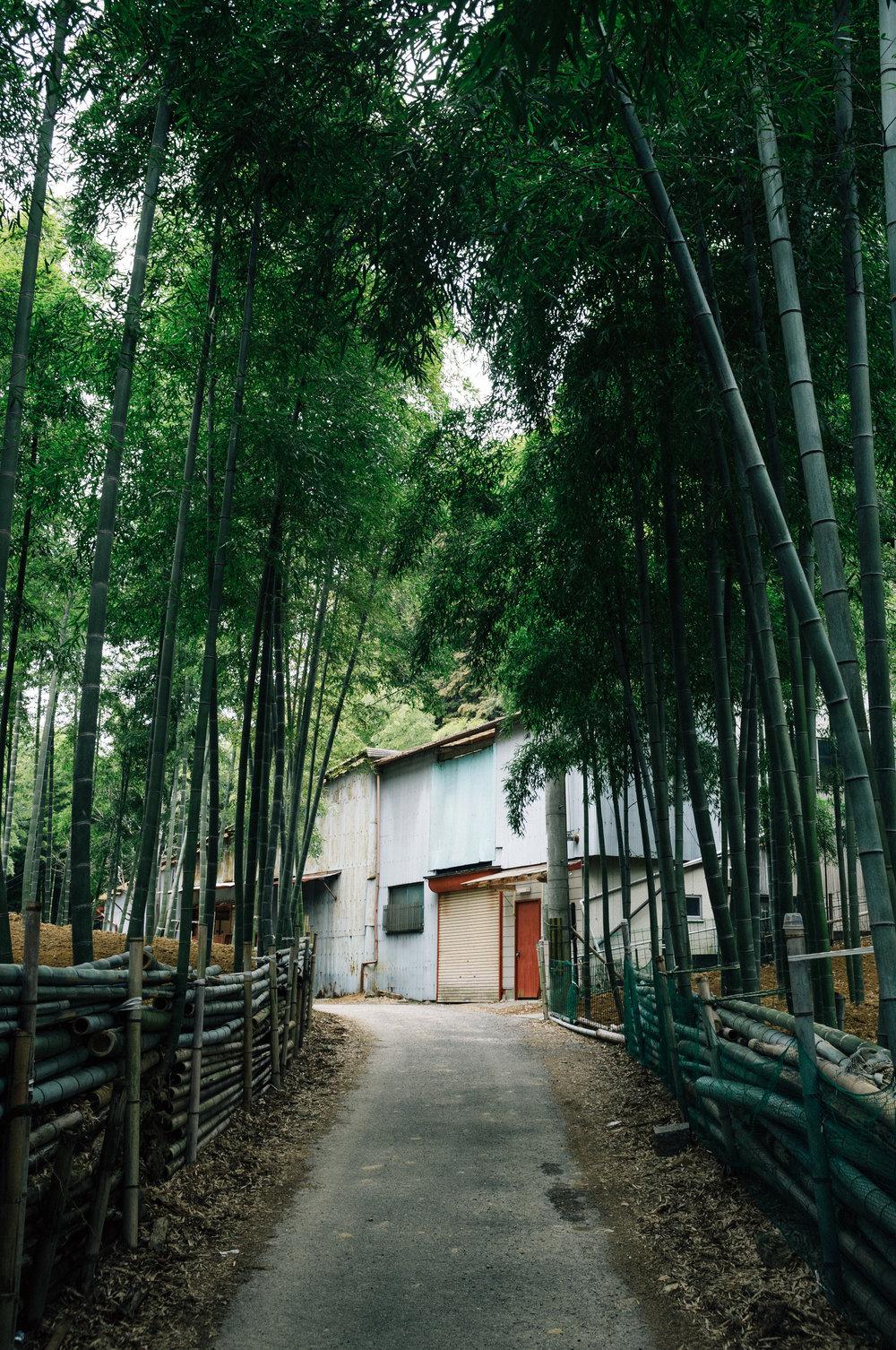 Inari 22.jpg